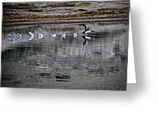 Loon In Greenland Greeting Card