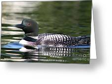 Loon In Summer Greeting Card