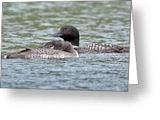 Loon Lullaby Greeting Card