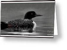 Loon Morning Greeting Card