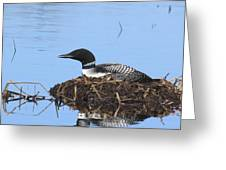 Loon On Nest Greeting Card