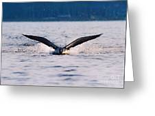 Loon Take Off Aborted Greeting Card