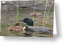 Loon Time Greeting Card by Peter Gray