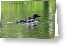 Loon With Chick On Back Greeting Card