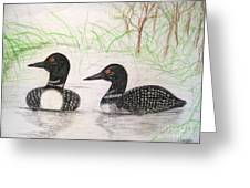 Loons Watching Greeting Card