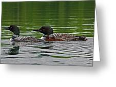Loons With Chicks Greeting Card