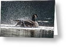 Splish Splash Greeting Card