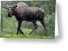 Loose Moose Greeting Card