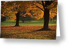 Loose Park Maple Trees Greeting Card by Chad Davis