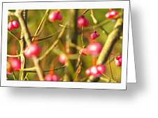 Loose Yourself In A Detail.  Greeting Card
