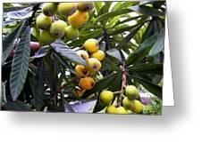 Loquat Exotic Tropical Fruit  2 Greeting Card
