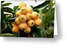 Loquat Exotic Tropical Fruit 4 Greeting Card