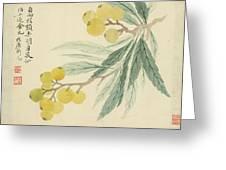Loquat Greeting Card