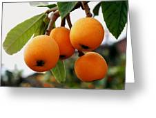 Loquats In The Tree 2 Greeting Card