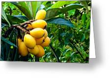 Loquats In The Tree 4 Greeting Card