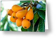 Loquats In The Tree 5 Greeting Card
