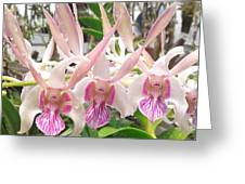 Lorie Mortimer Dendrobium Greeting Card