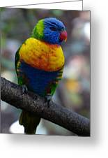 Lorikeet Parrot  Greeting Card
