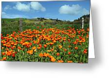 Los Olivos Poppies Greeting Card