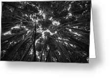 Lost Among The Bamboo Greeting Card