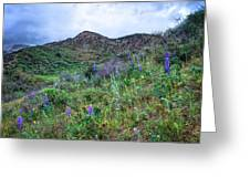 Lost Canyon Wildflowers Greeting Card