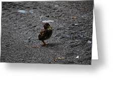 Lost Chick Greeting Card