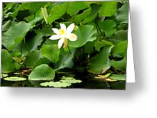Lost City Lotus Greeting Card