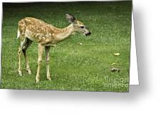 Lost Fawn Greeting Card