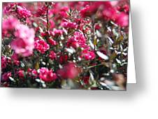 Lost In A Shrub Greeting Card