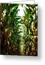 Lost In Corn Greeting Card