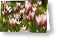 Lost In The Beauty Of Tulips Greeting Card