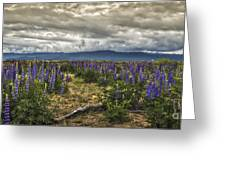 Lost In The Lupine Greeting Card