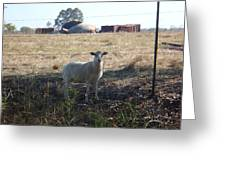 Lost Lamb Greeting Card