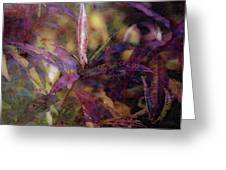 Lost Leaves Decorated In Purple 6003 Ldp_2 Greeting Card