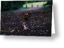 Lost Puppy Greeting Card