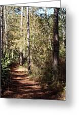 Lost Trail Greeting Card