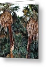 Thousand Palms Oasis  Greeting Card