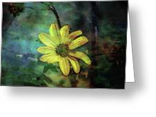Lost Wild Flower In The Shadows 5771 Ldp_2 Greeting Card