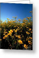 Lots Of Buttercups Against A Blue Sky Greeting Card