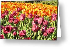 Lots Of Tulips Greeting Card