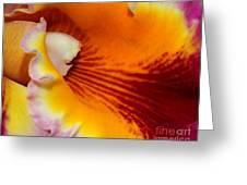 Lotsa Color Greeting Card