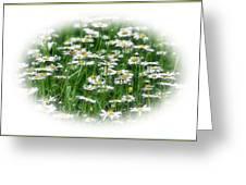 Lotsa Daisies Greeting Card
