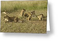 Lotsa Lions Greeting Card