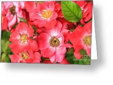 Lotta Pink Greeting Card