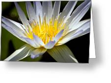 Lotus 10 Greeting Card