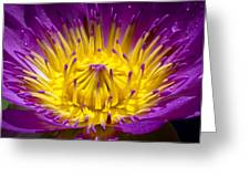 Lotus 12 Greeting Card