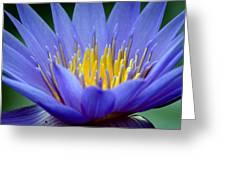 Lotus 6 Greeting Card