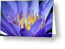 Lotus 9 Greeting Card