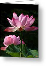 Lotus Beauties--upstaged Dl048 Greeting Card by Gerry Gantt