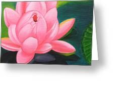 Lotus Bloom Greeting Card